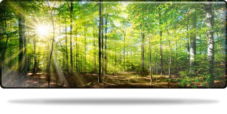 Ein sonnendurchfluteter Wald als Sinnbild für die Nachhaltigkeit und das Qualitätsmanagement in der Produktion